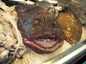 monkfish-470674_640