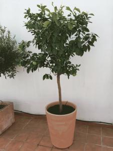 Orangenbaum Dachterrasse Casa de las Estrellas