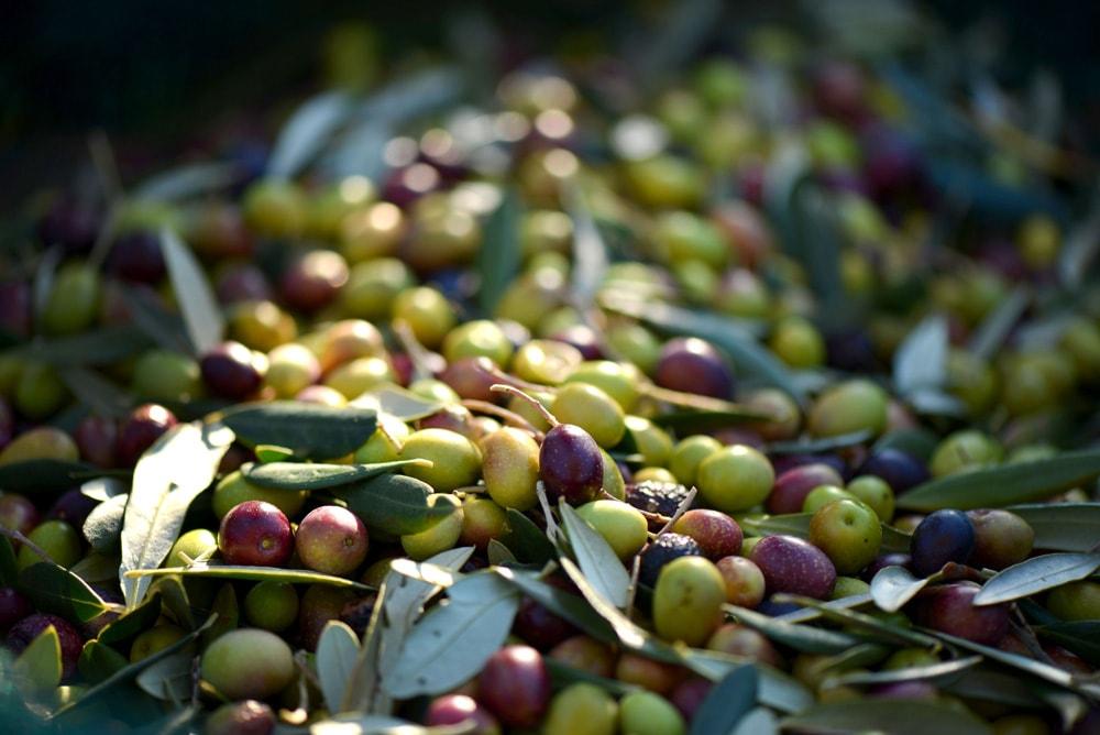 olives-min